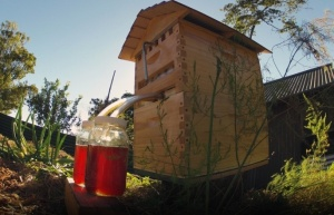 Flow_Hive__a_Gadget_for_Beekeepers__Sets_New_Crowdfunding_Record_on_Indiegogo